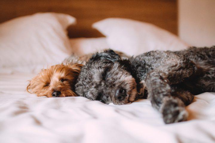 The 4 Best Breathing Exercises for Sleep