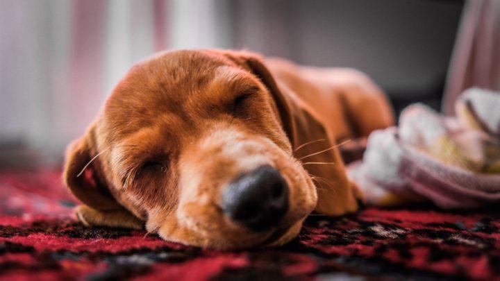 The Different Types of Sleep: REM Sleep vs Non-REM Sleep